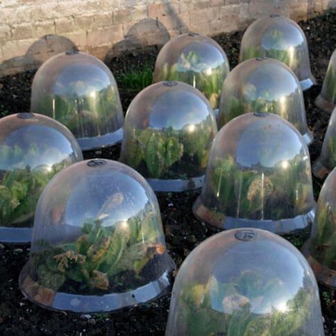 Garden Frost Protection Domes