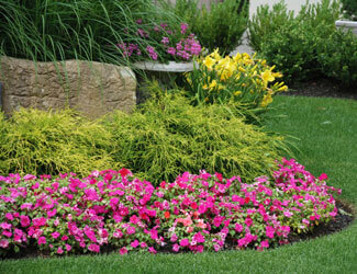 Colorful Landscaping Flowers