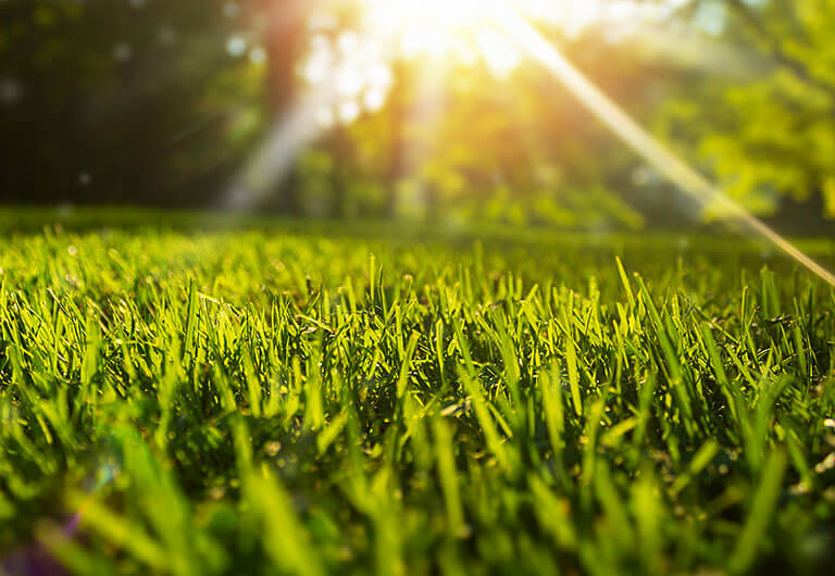 Wichita Lawn Care Reddi Lawn Maintenance