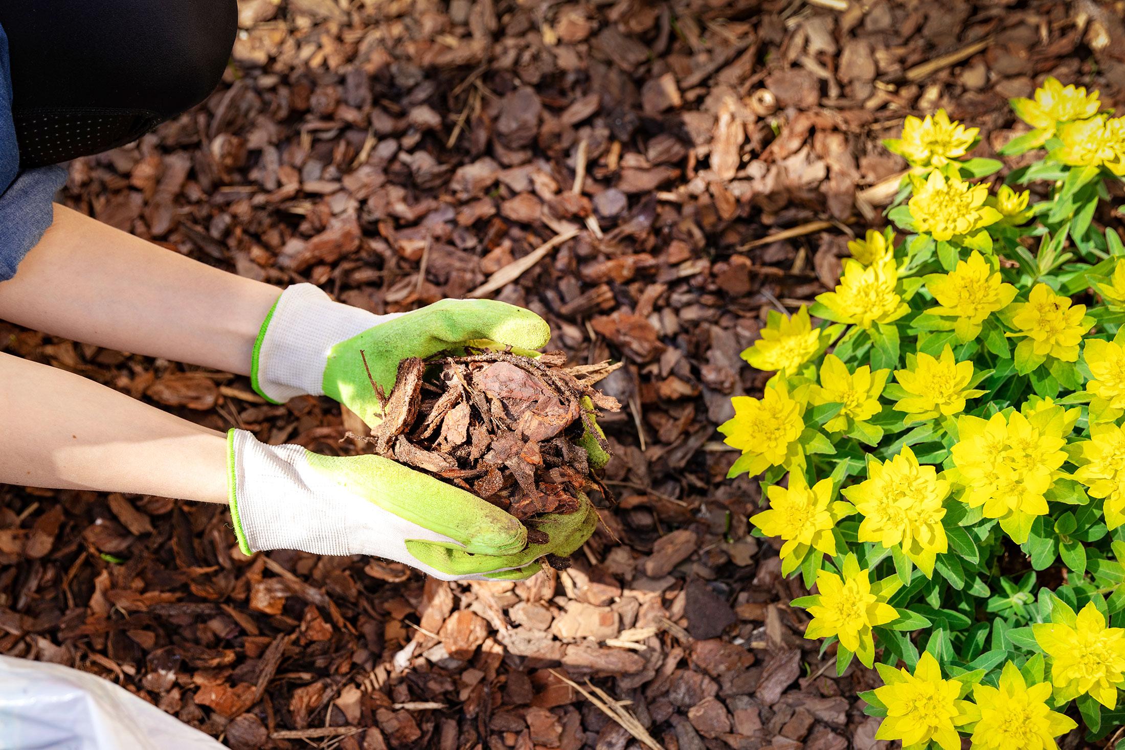 How Often Should You Replace Mulch Reddi Lawn Maintenance